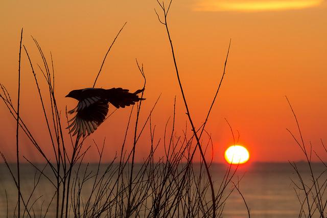 zonsondergang vlissingen