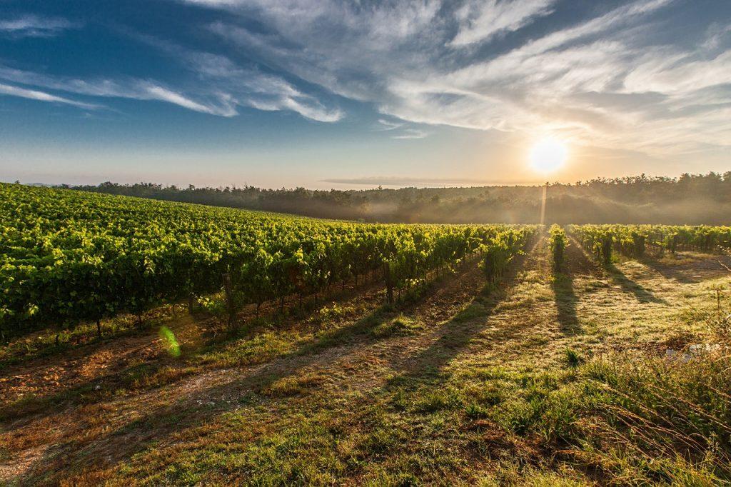 wijn-kenner-toscane