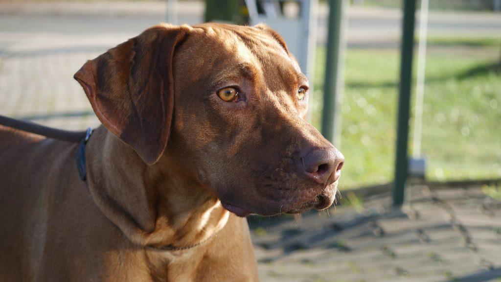 mannen honden 2