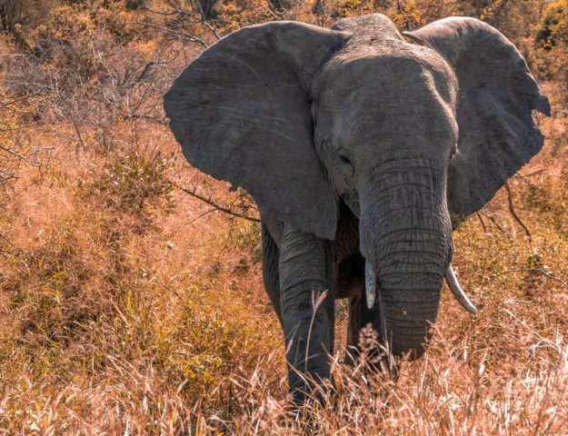 zuid-afrika-reis-kruger-park