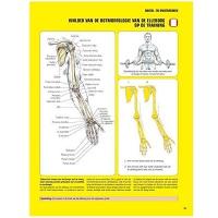 Krachttraining een anatomische benadering